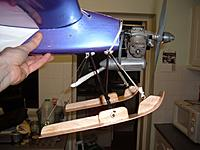 Name: cougar close side.jpg