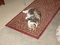 Name: Lucy Resting                      July 13, 2012.jpg