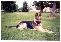Name: 2002 Viking.jpg