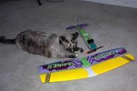 Name: bipe- kitten.jpg Views: 956 Size: 50.2 KB Description: