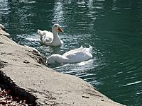 Name: Dredging port.jpg Views: 13 Size: 1.21 MB Description: Ducks dredging our Port
