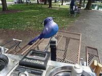 Name: Blue Bird.jpg Views: 12 Size: 1.76 MB Description: Blue Bird