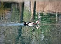 Name: DSC00036.JPG