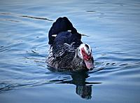 Name: DSC00038.JPG