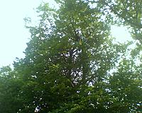 Name: 0616121503a.jpg Views: 178 Size: 210.3 KB Description: Lars in the tree top with my Gulf Coaster about to be lowered.