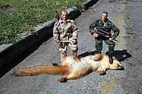 Name: Squirrel.jpg Views: 375 Size: 32.5 KB Description: