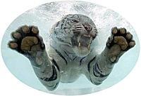 Name: Tiger 2.jpg Views: 47 Size: 60.4 KB Description: White tiger underwater