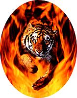 Name: Tiger Fire.jpg Views: 50 Size: 76.0 KB Description: Closer oval