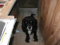 Name: e.jpg Views: 258 Size: 54.1 KB Description: This is my dog Piute.