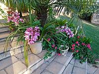Name: SAM_1639.jpg Views: 151 Size: 317.9 KB Description: Orchids in full bloom.