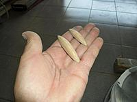 Name: SAM_1780s.jpg Views: 112 Size: 73.6 KB Description: sanded to shape the smaller can slide, or fit inside the bigger, we'll see these again much later in the build.