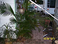 Name: Palm Lake Resort Green 001.jpg Views: 25 Size: 314.0 KB Description: Arica Palm on the left next to the shed. Brick walk to the back.