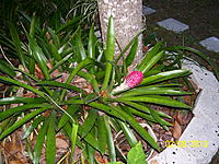 Name: Palm Lake Resort Green 002.jpg Views: 28 Size: 317.5 KB Description: Tree is an avacado tree but don't know what the red flower is.