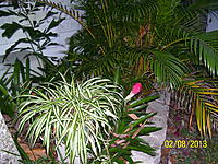 Name: Palm Lake Resort Green 003.jpg Views: 24 Size: 326.6 KB Description: Sider plant and Arica Palm.