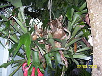 Name: Palm Lake Resort Green 004.jpg
