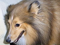 Name: RIMG0045.jpg