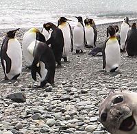 Name: seal.jpg Views: 399 Size: 259.1 KB Description: