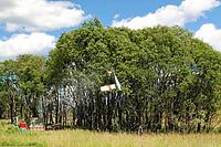 Name: Beaver_in Bever tree.jpg Views: 306 Size: 77.1 KB Description:
