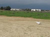Name: Gripen taking off.jpg Views: 53 Size: 17.8 KB Description: