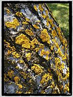 Name: IMG_2971.jpg