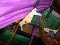 Name: hang glider hook-up 009.JPG Views: 272 Size: 66.6 KB Description: