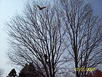 Name: 103_1496.jpg