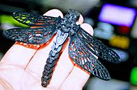 Name: dragonfly1.JPG Views: 32 Size: 225.6 KB Description: