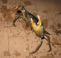 Name: toog5.jpg