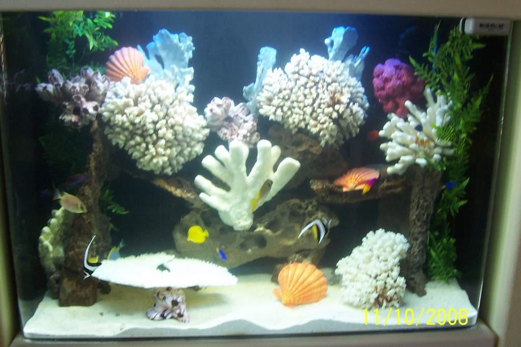 Name: SLOPE 013.jpg Views: 310 Size: 71.4 KB Description: fish system