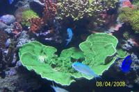 Name: thumb-100_3230.jpg