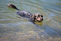 Name: Compressed_0720.jpg Views: 87 Size: 58.6 KB Description: Dumpster, the water dog