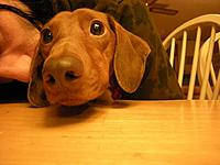 Name: oscar1.jpg