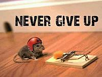Name: mouse.jpg Views: 66 Size: 31.9 KB Description: