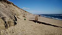 Name: 20171125_110431_Burst01~2 (800x450).jpg Views: 14 Size: 342.4 KB Description: Flyable slopes, if you don't mind the walk. But it would be quicker to drive to Wellfleet