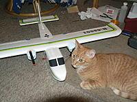 Name: BN2 Kitty 002.jpg Views: 78 Size: 178.2 KB Description: