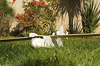 Name: CL-415-PCH-3.jpg