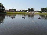Name: Spring Lake - 2011 065.jpg Views: 114 Size: 162.7 KB Description: This is  like herding a flock of cats