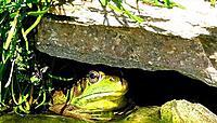 Name: frog1000.jpg Views: 71 Size: 66.7 KB Description: burp bert ..burp bert.!!!