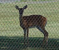 Name: Deer.jpg Views: 80 Size: 95.9 KB Description: Deer~