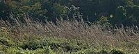 Name: Gude Grass.jpg Views: 111 Size: 169.1 KB Description: Spider webs in the grass