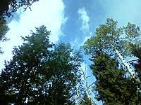 Name: 0728130930 (2).jpg Views: 62 Size: 186.9 KB Description: trees!