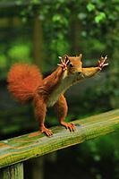 Name: squirrel.jpg Views: 49 Size: 151.4 KB Description: