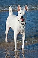 Name: Bella 20120715_02.jpg Views: 56 Size: 183.8 KB Description:
