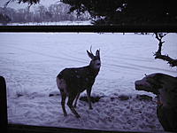 Name: DSCF0966.jpg