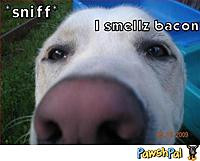 Name: funny-pet-image-1317331622.jpg Views: 32 Size: 30.5 KB Description: