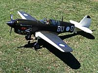 Name: Angry Bee at Pitt Town.jpg
