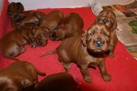 Name: Jayne's puppies and Bird of Time 004.jpg Views: 313 Size: 67.9 KB Description: