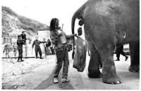 Name: Libs.elephant.jpg Views: 96 Size: 20.2 KB Description: Full bag...