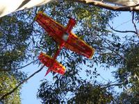 Name: CAP in Tree 240509.jpg