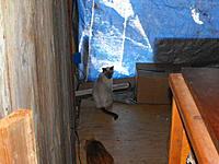 Name: 1110120002.jpg Views: 43 Size: 269.2 KB Description: Tsamo, the boardwalk  wains coat and the tarp